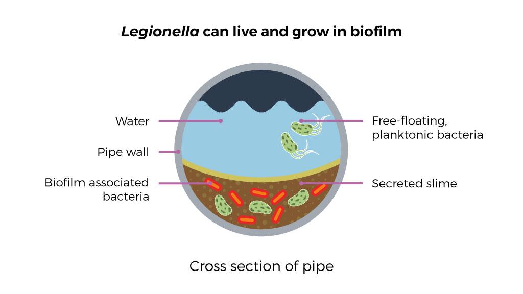 Biofilm in pipework diagram